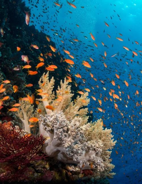 تسجيل تسع جزر سعودية كمواقع ذات قيمية بيئية كبيرة