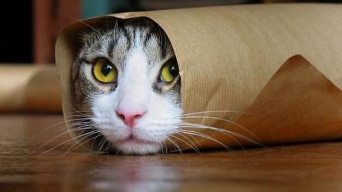 """قط إيطالي يدخل موسوعة جينيس """"فيديو"""""""