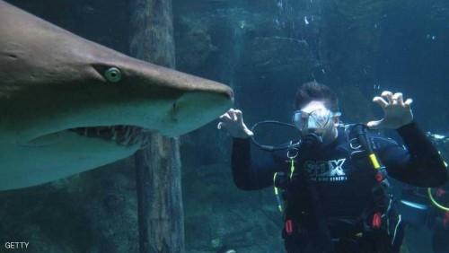 90 ألف دولار منحة أسترالية لصناعة بدلة غطس مقاومة لسمكة القرش