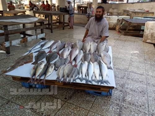 بالصور.. التصدير العشوائي وغياب الرقابة يحرمان مائدة عدن من الأسماك