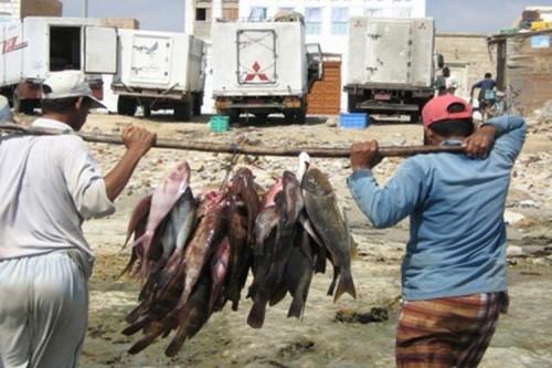 """""""الثروة السمكية"""" تمنع تصدير 3 أنواع من الأسماك"""