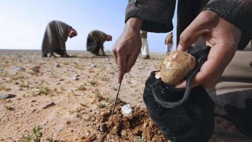 العراق.. مسلحون يختطفون 12 مواطنًا من صائدي الكمأ