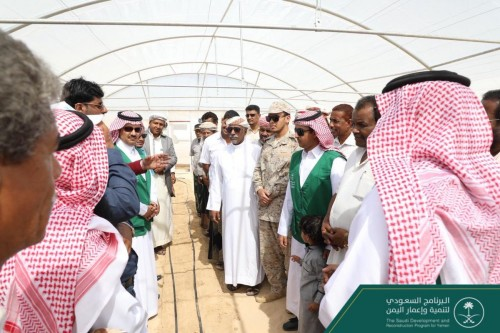 المزارعون في اليمن يستعدون لجني محاصيل البيوت المحمية