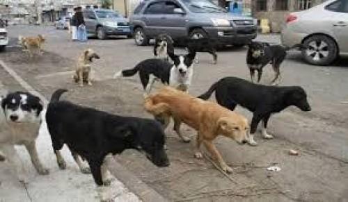 أهالي القطن يصرخون من الكلاب الضالة: تهدد حياة أطفالنا وأغنامنا