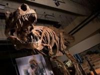 تاريخه 66 مليون عام..كندا تعلن عن أقدم وأضخم ديناصور في العالم