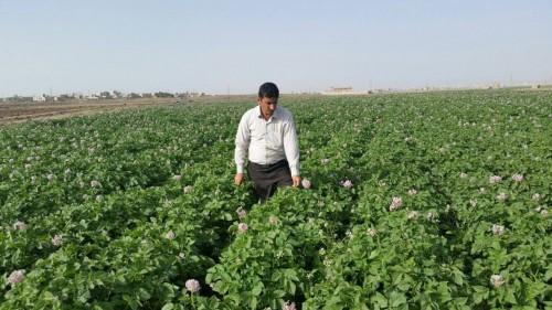 البرنامج السعودي: المساحات الزراعية في اليمن مصدر رزق للآلاف