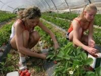 مقالة تكشف: هجرة الأيدي العاملة من أوكرانيا