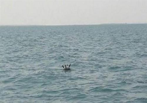 الفرق الهندسية بالجيش تنتزع 500 لغم حوثي بالمياه الإقليمية