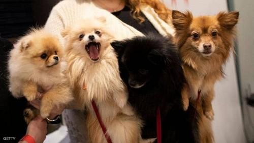 دراسة تحذر من سلالة أنفلونزا الكلاب المتحورة