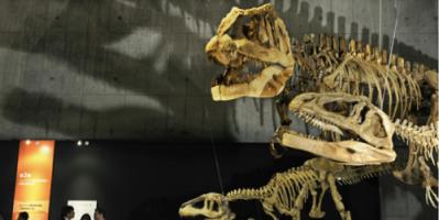 تاريخه 150 مليون عام.. هيكل عظمي لديناصور للبيع في مزاد بفرنسا