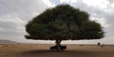 """السعودية..حرق شجرة معمرة يثير غضب نشطاء البيئة بالمملكة """"فيديو"""""""