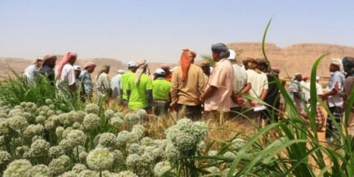 ورشة عمل لدعم 200 مزارع بمديريتي سيئون وتريم