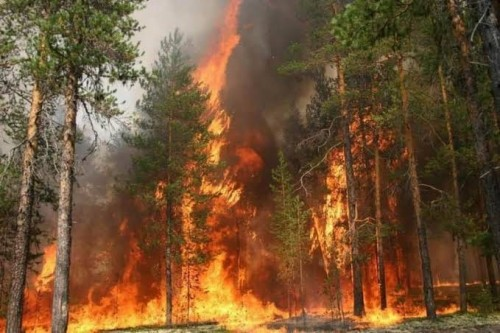 إصابة 342 شخصًا بسبب حرائق الغابات شرقي سيبيريا