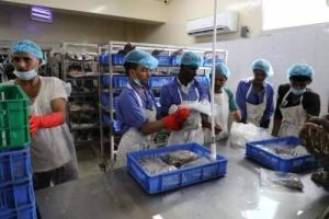 """أنشئ بدعم إماراتي.. مصنع """"برايم"""" للأسماك يحدث طفرة في إنتاج وكفاءة صيادي سقطرى"""