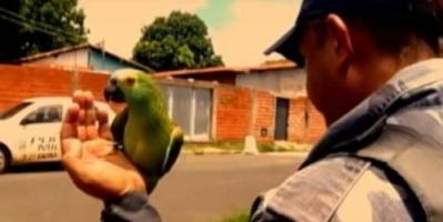 البرازيل.. الشرطة تعتقل ببغاء عند مداهمتها وكر لتجارة المخدرات