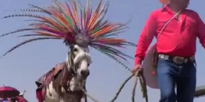 في مهرجان شعبي..المكسيك تحتفي بالحمير لتحملها عبء الأعمال الشاقة