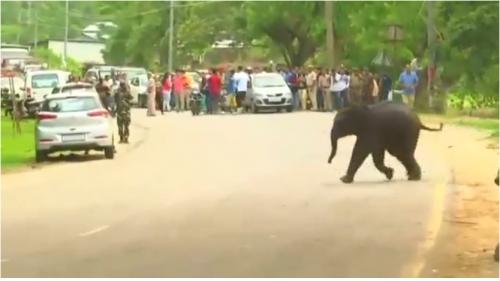 إنقاذ فيل صغير سقط في بحيرة بالهند (صور)