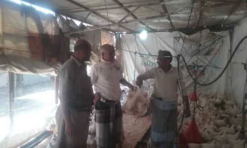 حملة للإشراف على المنتجات الحيوانية المعدة للذبح بشبوة
