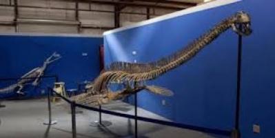 يزن وزنه إلى 15 طن.. اكتشاف عظام أكبر ديناصور بحري