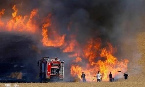 تونس: حصيلة حرائق الأراضي الزراعية بلغ 338 في 9 أيام