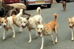 القبض على جزار كلاب في إب