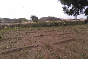 الجراد الصحراوي يهاجم مزارع تبن بلحج
