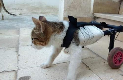 اختراع تونسي يمنح القطط العاجزة فرصة ثانية للحياة