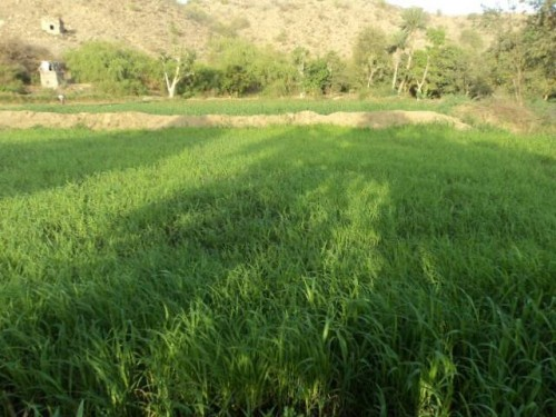 دورة تدريبية في مجال إنشاء وإدارة المزارع الحقلية بعدن