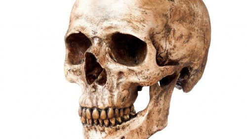 تعيد التفكير في أصول الإنسان.. العثور على جمجمة عمرها أكثر من 210 آلاف عام