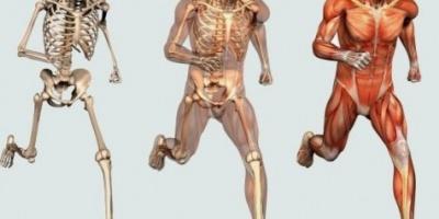 العظم الإسفنجى فى الجسم يمنع الكسور ويحمي من الصدمات