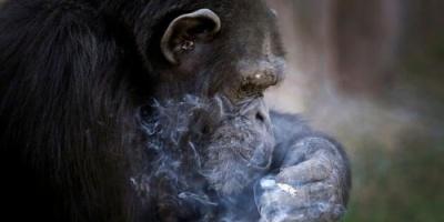 بسبب إدمان الحيوانات.. أمريكا تحذر من مخاطر إلقاء المخدرات بالأنهار والمراحيض