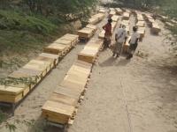 توزيع خلايا النحل لعدد 66 نحالا من صغار المزارعين في أحور