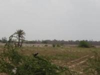 مليشيات الحوثي تستهدف مواقع القوات المشتركة في منطقة الجبلية