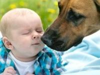 احترس.. 10 أمراض خطيرة تنقلها لك بعض الحيوانات