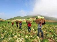 77 مليار دولار أرباح الصين الزراعية خلال 2018