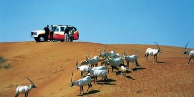 ceoworld magazine تختار صحراء دبي كأفضل سفاري بالعالم