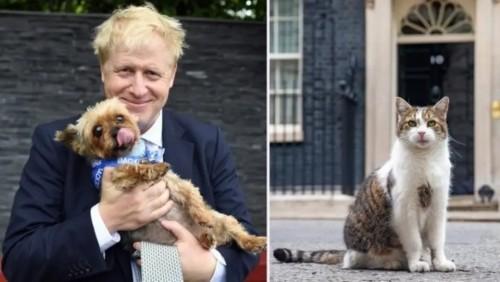 """""""جونسون"""" ينوي اقتناء كلب بمقر الحكومة البريطانية"""