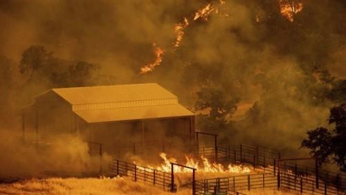 السلطات الأمنية بالجزائر تفرض حالة الطوارئ القصوى بعد انتشار الحرائق