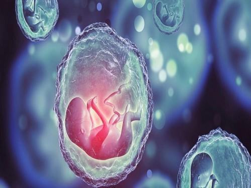 علماء ينجحون في استنساخ جنين من خلايا القردة والبشر