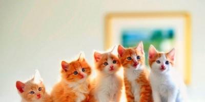 اليوم.. الاحتفال بيوم القطط العالمي