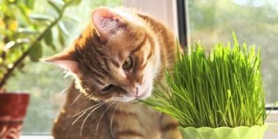 تعرف على سر حب القطط للأعشاب