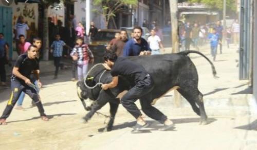 """مصر.. مصرع جزار وإصابة 9 أشخاص في هجوم """"عجل"""" قبل ذبحه"""