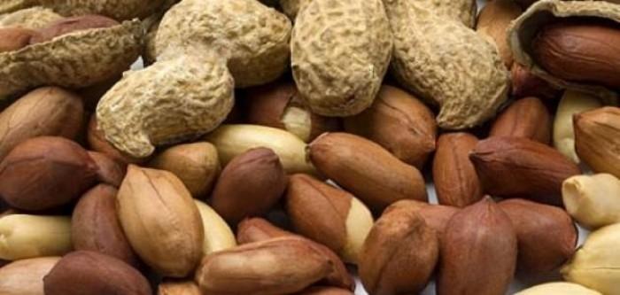 صادرات مصر من الفول السوداني تتخطى 39 آلف طن بقيمة 62 مليون دولار