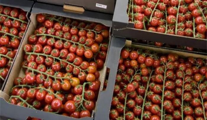 صادرات طماطم المغرب نحو أوروبا تتجاوز ٤٦٢ آلف طن وترفع من قيمة اقتصاد البلاد