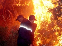 """الجزائر.. حريق هائل يلتهم منتزه """"دنيا بارك"""""""