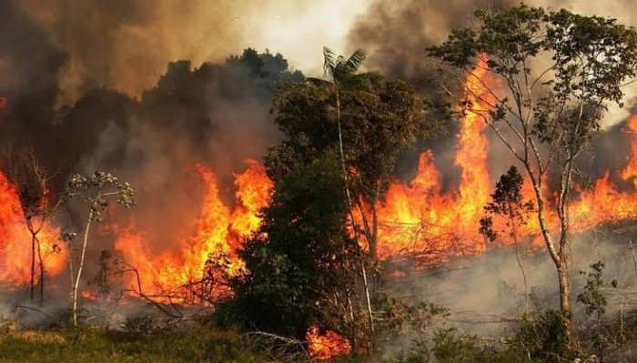 الرئاسة البرازيلية تأمر بنشر قوات الجيش لمكافحة حرائق غابات الأمازون
