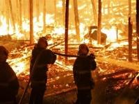 حرائق الأمازون أثرت على الطلب العالمي للحوم الأبقار والصويا