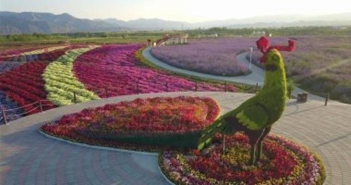 الصين: بناء أربعة مراكز في الخارج لنقل التكنولوجيا الزراعية