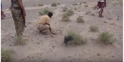 تفكيك حقل ألغام حوثي في مديرية الخوخة بالحديدة (فيديو)