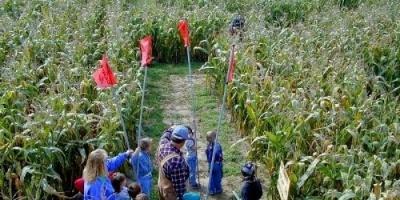 مزارعو الذرة الأمريكيون يواجهون أكبر تراجع منذ 5 سنوات